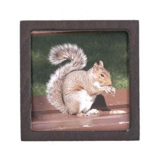 Eichhörnchen Schmuckkiste