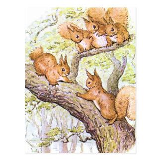 Eichhörnchen-Sitzung Postkarten