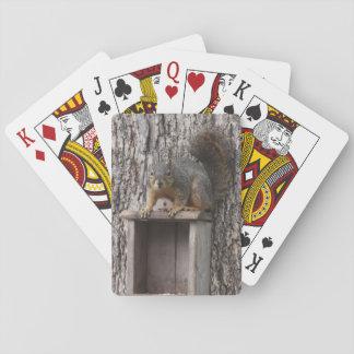 Eichhörnchen-Spielkarten Spielkarten