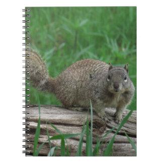 Eichhörnchen Spiral Notizblock