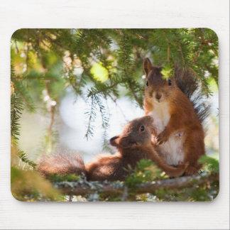 Eichhörnchen-Stillen Mousepads