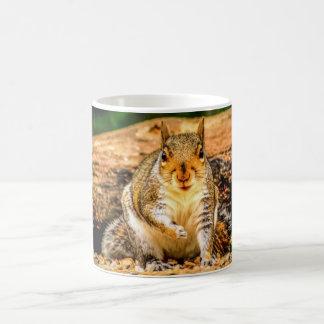 Eichhörnchen-Tasse Kaffeetasse