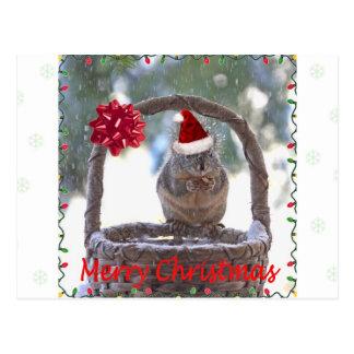 Eichhörnchen-tragende Weihnachtsmannmütze Postkarten