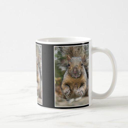Eichhörnchen-Überraschung Kaffee Haferl