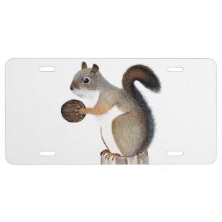 Eichhörnchen US Nummernschild