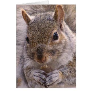 Eichhörnchenanmerkungskarte Karte