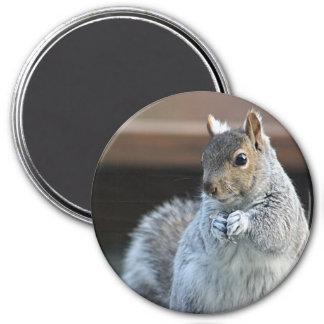 Eichhörnchenphotographie Runder Magnet 7,6 Cm