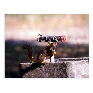 Eichhörnchentrinken Postkarte
