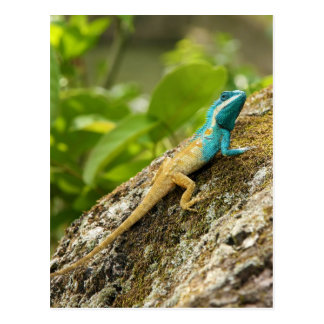 Eidechse Blau-Mit Haube Calotes Mystaceus Postkarte