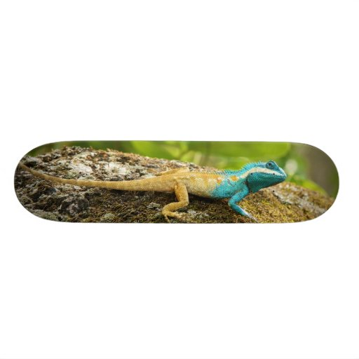 Eidechse Blau-Mit Haube Calotes Mystaceus Personalisierte Decks
