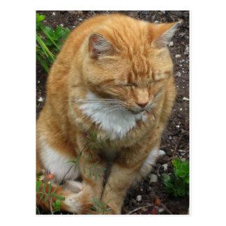 Eidechse, orange Tiger-Katze Postkarte