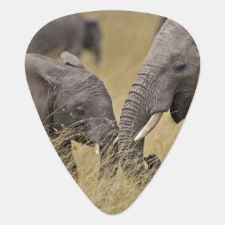 Ein afrikanischer Elefant, der auf den Gebieten Plektrum