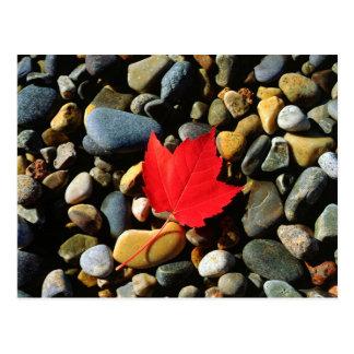 Ein Ahornblatt auf einem Felsen-Hintergrund Postkarte
