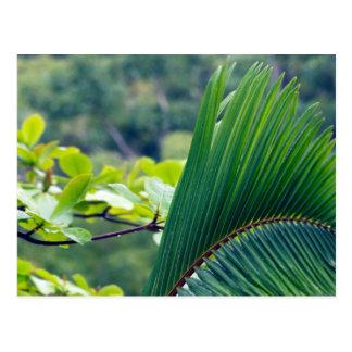 Ein anderes Palmblatt im Regenwald von Indonesien Postkarte