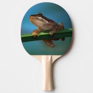 Ein Baby-Baum-Frosch Tischtennis Schläger