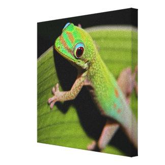 Ein Baby-GrünGecko Leinwanddruck