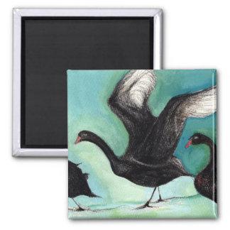 Ein Ballett schwarzer Schwäne 2013 Quadratischer Magnet