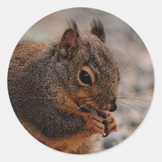 Ein beschäftigtes Douglas Squirrelel Runder Aufkleber