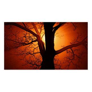 Ein bloßer Baum am Sonnenuntergang