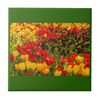 ein Blühen der Tulpen in einem Park auf Keramikfliese