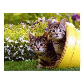 Ein Blumen-Topf Kätzchen Postkarte