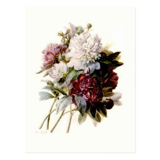 Ein Blumenstrauß der Pfingstrosen durch Postkarte
