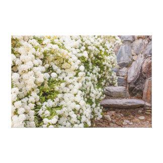 ein Busch weißer spirea Blumen auf eingewickelter Leinwanddruck