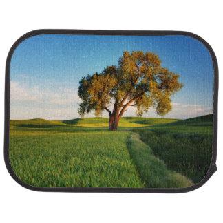 Ein einziger Baum umgeben durch Rolling Hills des Autofußmatte