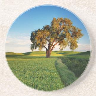 Ein einziger Baum umgeben durch Rolling Hills des Getränkeuntersetzer