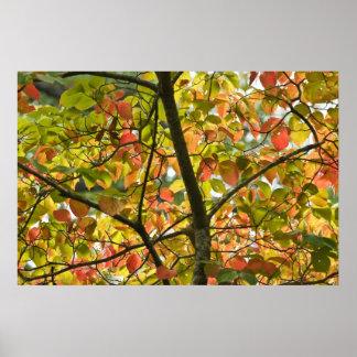 Ein empfindlicher Übergang des Herbst-Blätter Poster