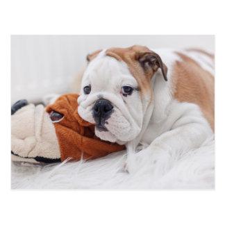 Ein englischer Bulldoggen-Welpe, der mit einer Postkarte