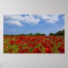 Ein Feld voll der roten Blumen Poster