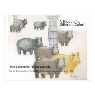 Ein Flusspferd einer anderen Farbe! Postkarte