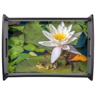 Ein Frosch unter einer Seeroseblume Tablett
