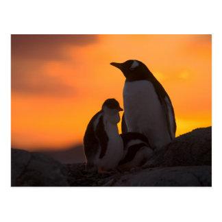 Ein gentoo Pinguinerwachsener und -küken werden Postkarte