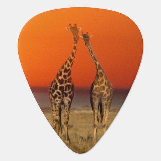 Ein Giraffenpaar geht in den Sonnenuntergang, Plektron
