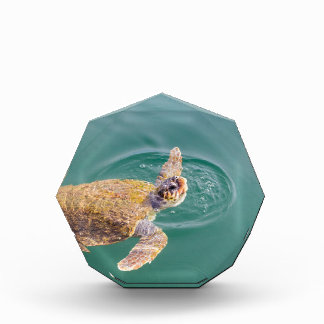 Ein großer Schwimmen-Meeresschildkröte Caretta Auszeichnung