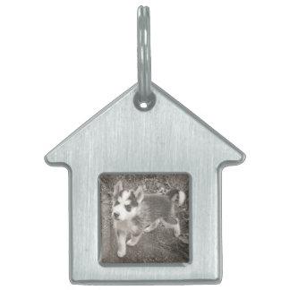 Ein großes Geschenk - ein Haus-Umbau für Ihren Tiermarke