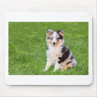 Ein junger sheltie Hund, der auf Gras sitzt Mousepad