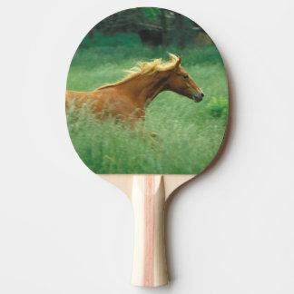 Ein junger Stallion läuft durch eine Wiese von Tischtennis Schläger