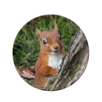 Ein junges rotes Eichhörnchen Porzellanteller