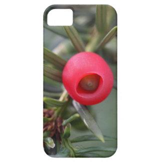 Ein Kegel einer Eibe (Taxus baccata) Etui Fürs iPhone 5