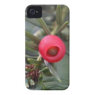 Ein Kegel einer Eibe (Taxus baccata) iPhone 4 Hülle