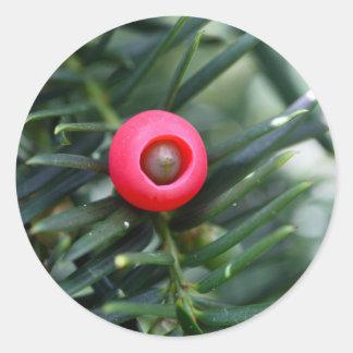 Ein Kegel einer Eibe (Taxus baccata) Runder Aufkleber