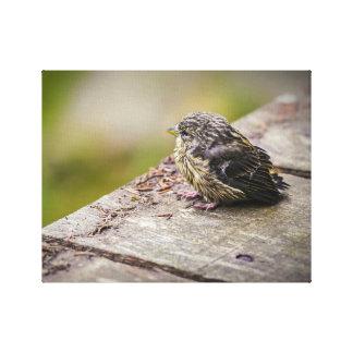 ein kleiner Vogel Gespannte Galerie Drucke