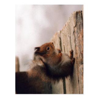 Ein kleines europäisches Eichhörnchen (Sciurus Postkarte