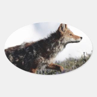 Ein Kojote geht in Yellowstone Nationalpark, Wyomi Ovaler Aufkleber