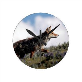 Ein Kojote geht in Yellowstone Nationalpark, Wyomi Runde Wanduhr