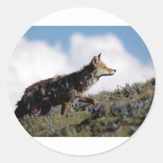 Ein Kojote geht in Yellowstone Nationalpark, Wyomi Runder Aufkleber