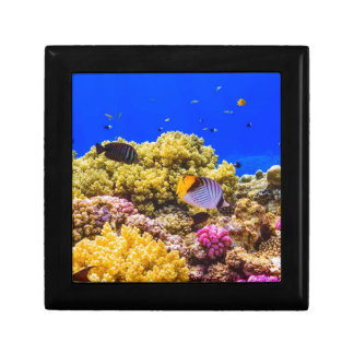 Ein Korallenriff im Roten Meer nahe Ägypten Geschenkbox